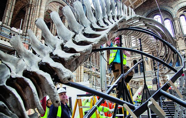 This Horizon documentary follows the painstaking two-year-long process of dismantling Dippy from London's Natural History Museum