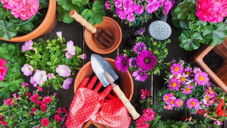 Every gardener should know, Gardening, different spring and summer flowers, gardening tools on garden table