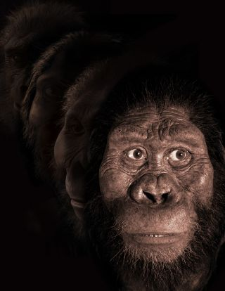reconstruction of face of australopithecus