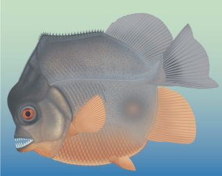An artist's reconstruction of the piranha-like fish, showing off its crazy ferocious teeth.