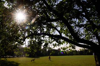 A woman walks her dog in London's Greenwich Park on Sept. 21, 2016 in London, England. Today marks final day of summer as the autumn equinox arrives on Thursday.