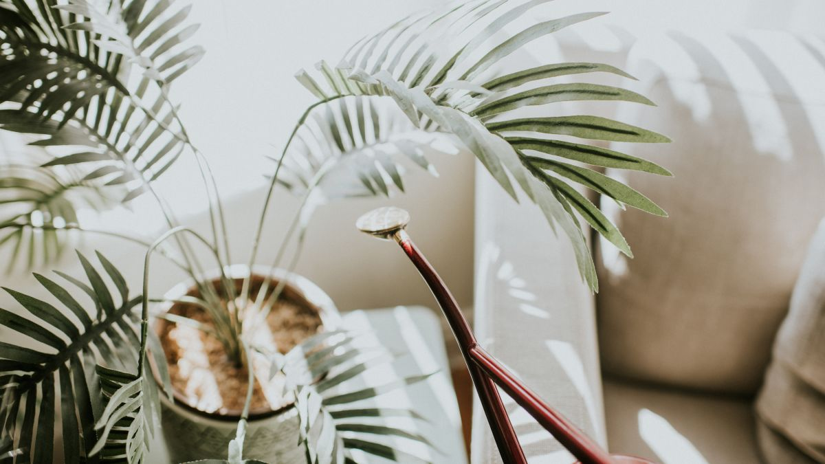 Sarah Raven launches new houseplant range –and names her favourite indoor plants