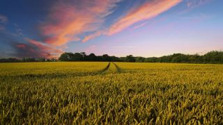 Using cloud-based technology solutions for more productive farming