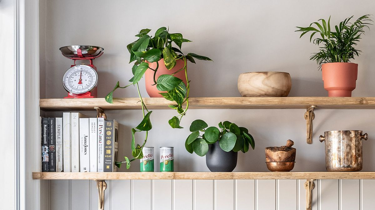 You can now get insurance for your houseplants