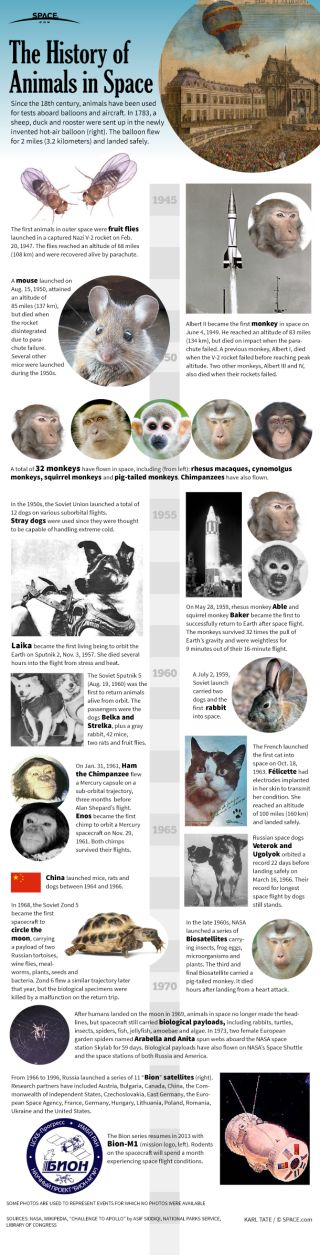 Infographic: The history of animals used for testing in space flight.