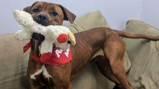 Lifeline Pet Rescue