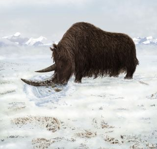Paleontologists discover new woolly rhino species.