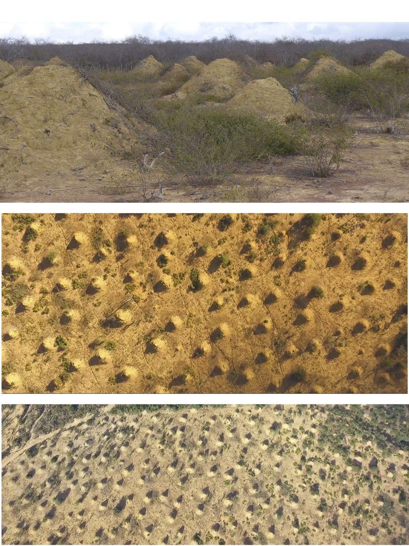 2018's Weirdest Google Earth Apparitions   Live Science