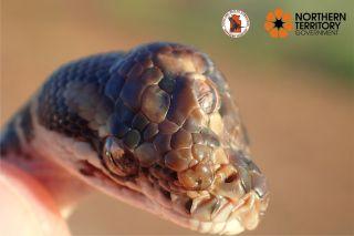 three-eyed snake