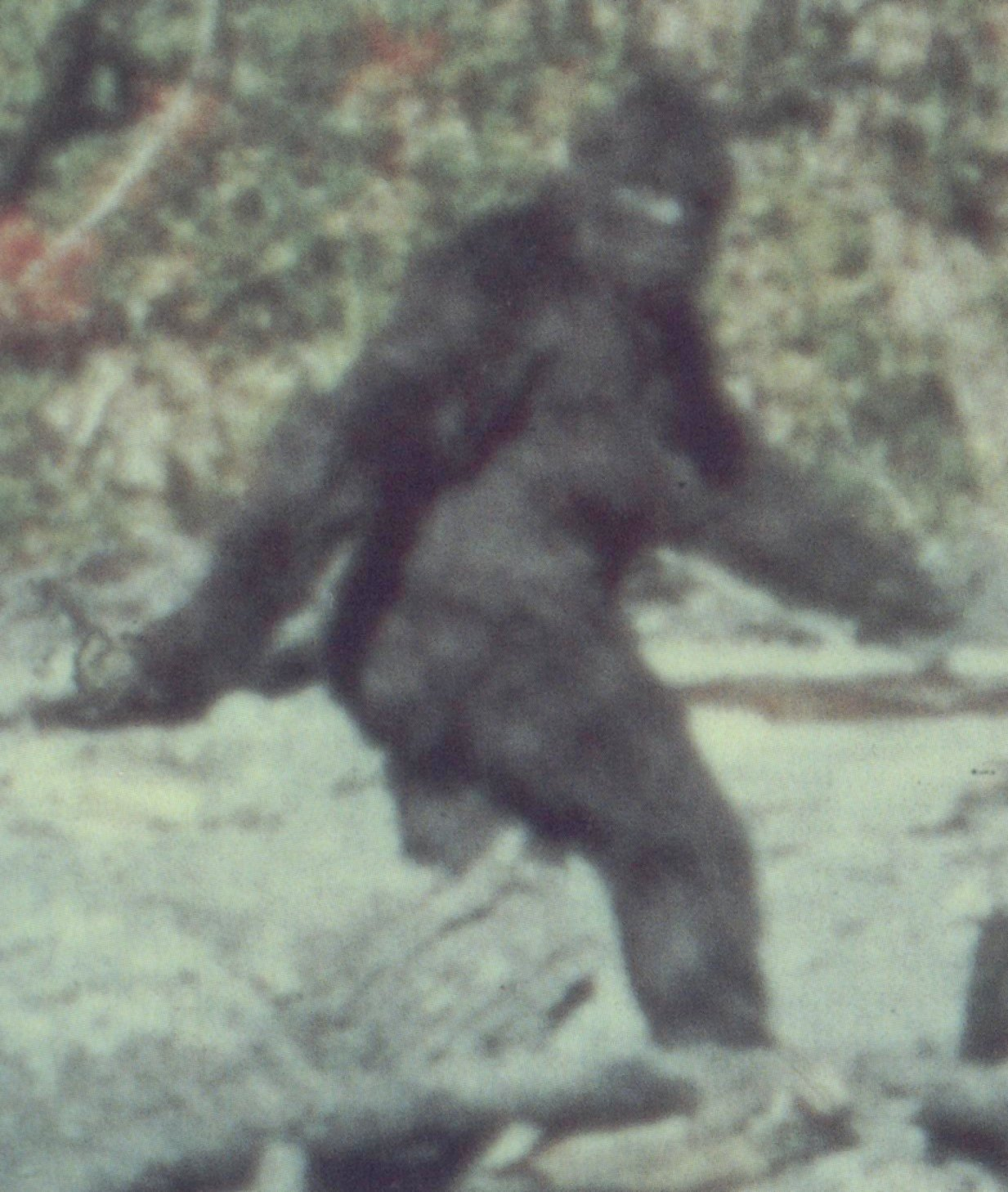 Bigfoot: Man-Monster or Myth? | Live Science