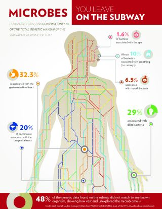 Infographic showing body-linked bacteria