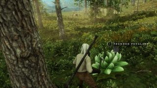 fronded petalcaps in new world