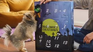 Halloween advent calendars for pets: Puppy sniffing their Halloween dog advent calendar