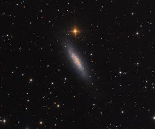 NGC 6503 Dwarf Spiral Galaxy Fera