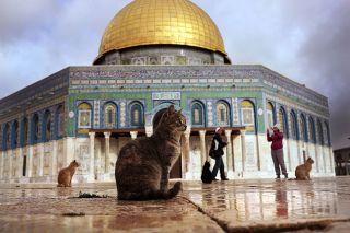 Here, the Dome of the Rock is visited by cats in Jerusalem, Israel, on Dec. 1, 2014. The dome is one of the most popular attractions of the holy site called Temple Mount by the Jews and Al-Haram al-Sharif by Muslims.