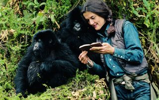 The first of a three-part documentary investigating the brutal murder of world-renowned mountain gorilla expert Dian Fossey.