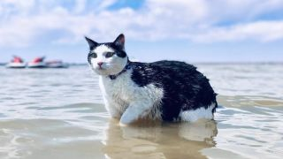 Pluto the adventure cat in the water
