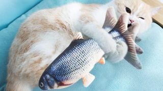 Toys for indoor cats