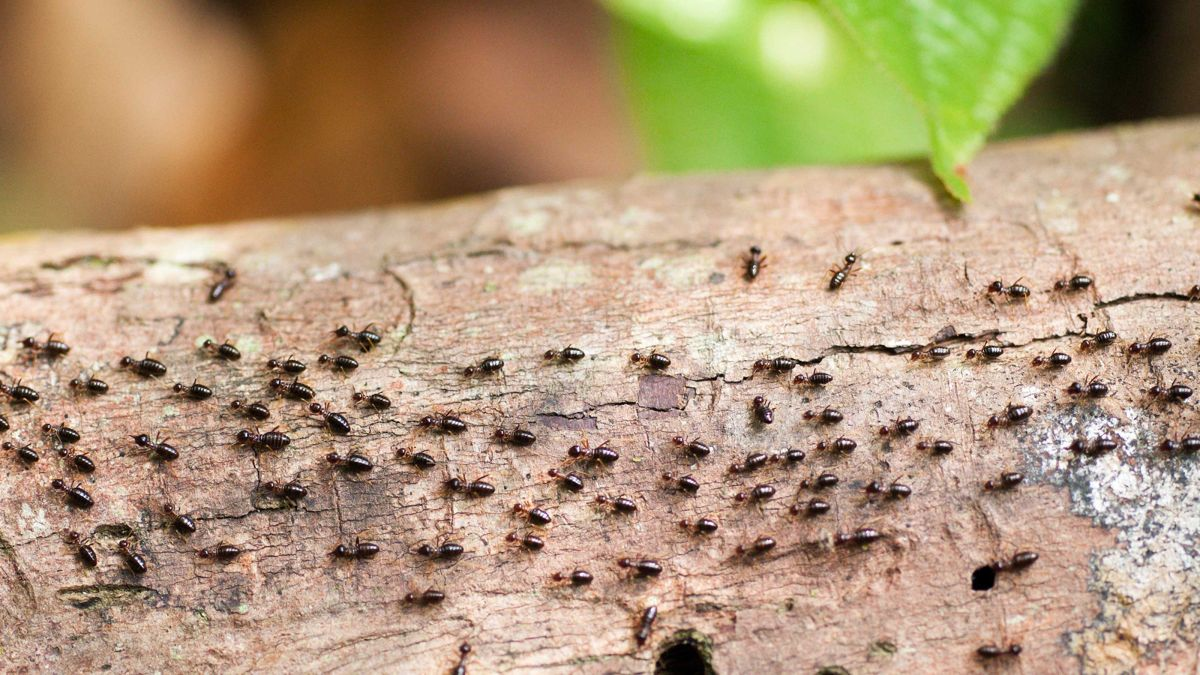 How to get rid of termites: advice for tackling these small but mighty pests