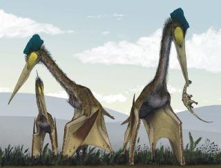 An artist's illustration of the Azhdarchid pterosaur species Quetzalcoatlus northropi