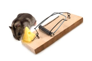 mouse, mousetrap, cheese