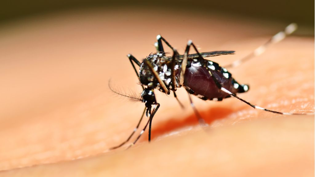 Florida releasing genetically modified mosquitoes to prevent diseases like Zika