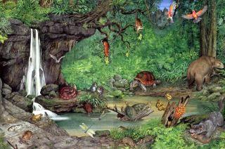 miocene forest