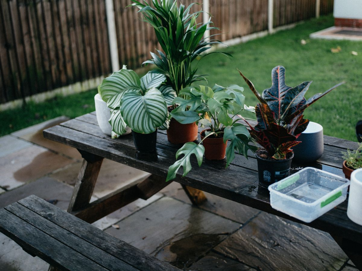 Here's exactly how to bring your houseplants outside for the summer, according to experts