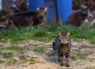 Feral cats running loose in a northeast Washington, D.C., neighborhood on April 4, 2014.