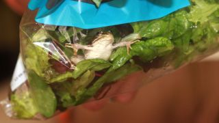 Shoppers in Southampton, Britain, encountered this live frog in a bag of supermarket salad in 2012.