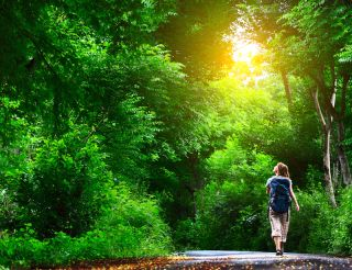 A woman walks down a road surrounded by tall green trees.