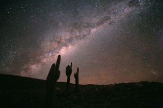 Large cacti appear to point at the sky in the Chilean Atacama Desert. The Milky Way dominates the image, with the Large Magellanic Cloud in the lower right. These cacti (Echinopsis atacamensis) grow on average 0.4 inches (1 centimeter) per year, and reach