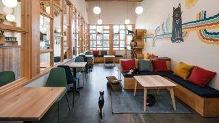 Inside Purringtons cat cafe