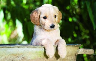 Start the day with a five-minute boost of puppy love!
