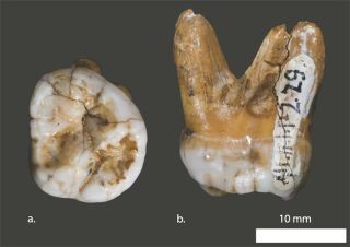 teeth from a new branch of ancient humans