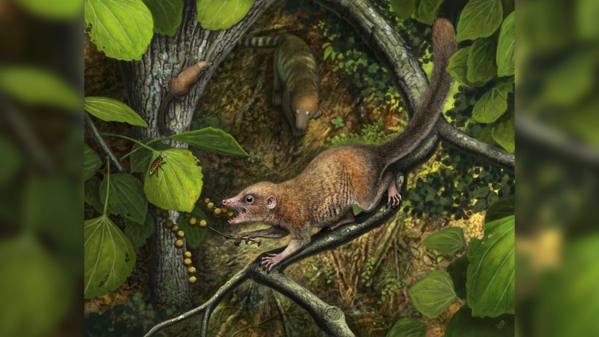 Primate ancestor of all humans likely roamed with the dinosaurs