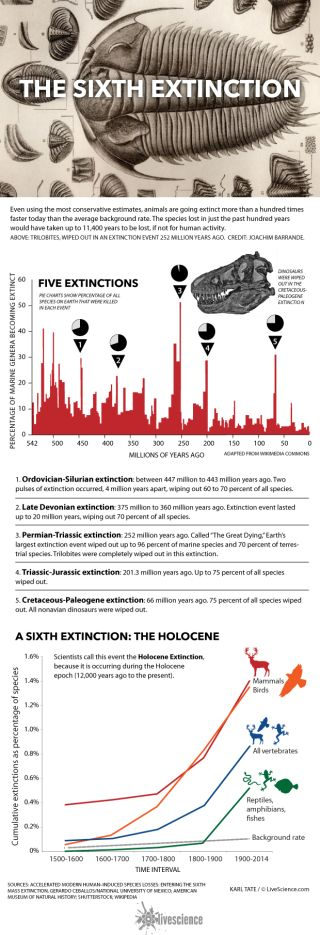 Chart of extinction events that wiped out most life on Earth.