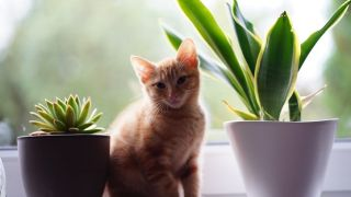 Plants cats are allergic to