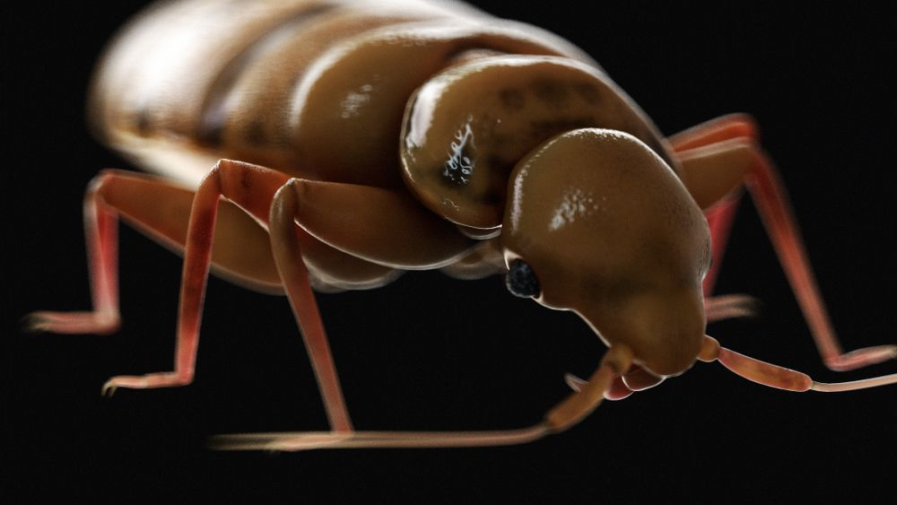 New Study Finds Bedbugs Have Pestered the World for 115 Million Years