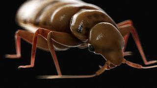 bedbug illustration
