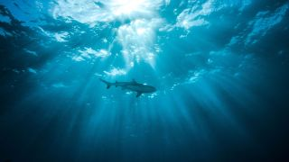 Silhouette of a shark as seen from below water, looking up at the surface.