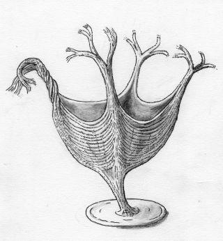 H. quadriformis