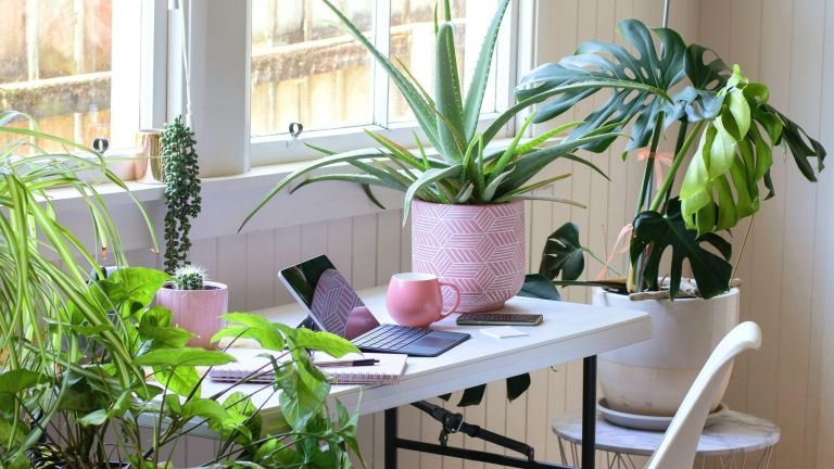 best low maintenance indoor plants including aloe vera and monstera in a home office