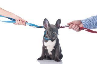 breakup as a pet owner