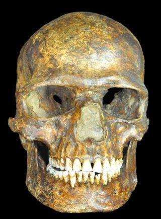 Kostenki Skull