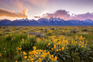 Flowers bloom in Grand Teton National Park in Wyoming.