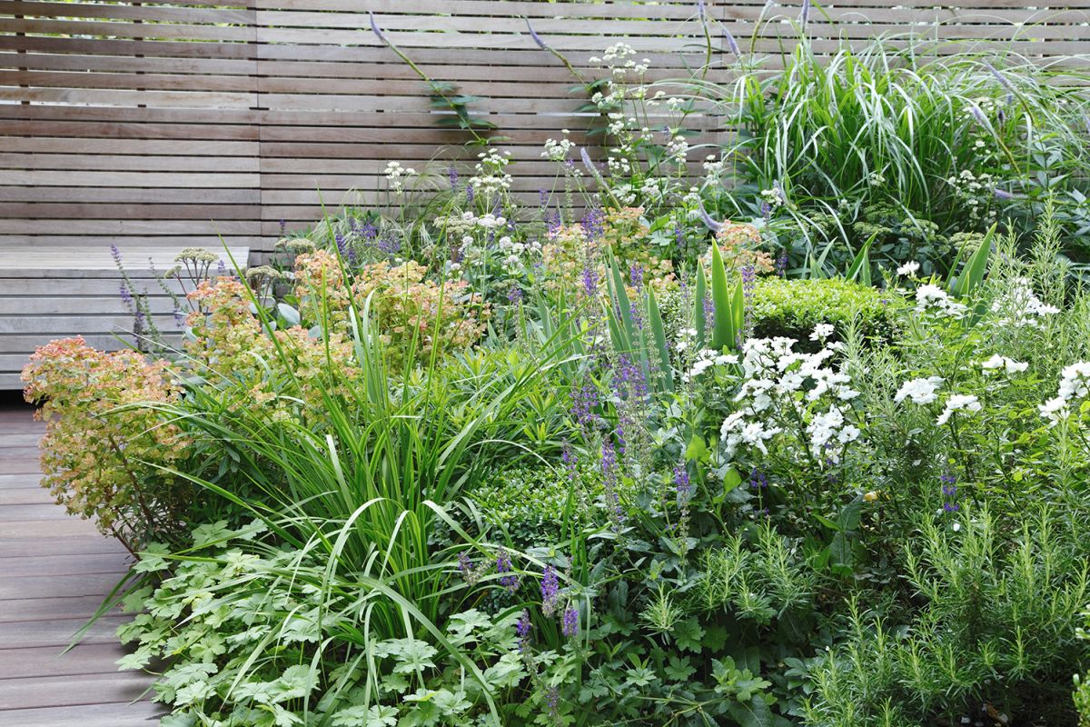 How to choose plants for your modern garden: 10 designer tricks that work