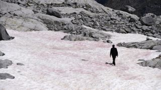 Algae have turned the Presena glacier in Italy a pretty pink.