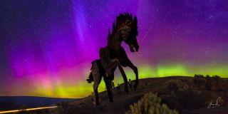 Wild Horses Matias