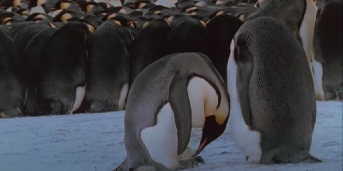 A scene from March Of The Penguins